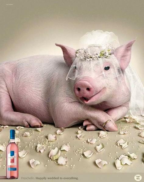 pig-bride (1) (473x600, 80Kb)
