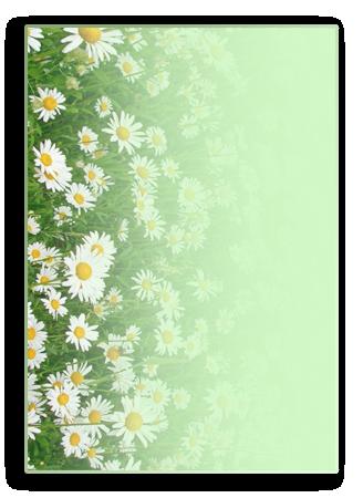 ромашки-обр (328x450, 218Kb)