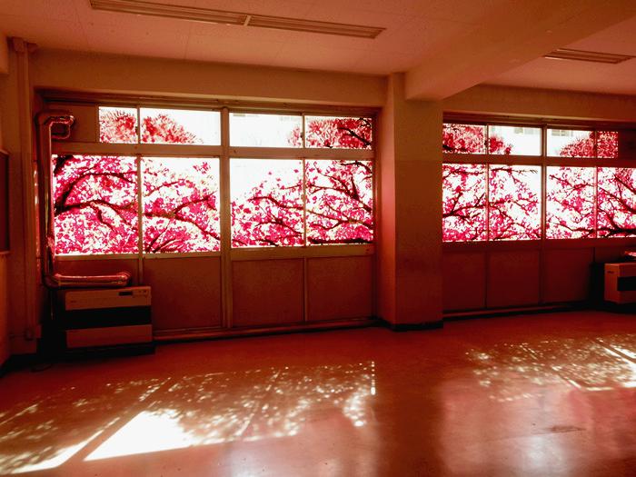 Cherry_Blossom_Murals_01 (700x525, 321Kb)