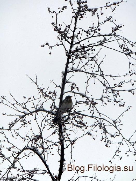 Птица на дереве/3241858_vetvi (525x700, 108Kb)