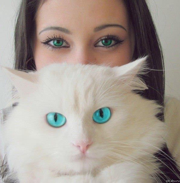 картинка дня белый кот (596x604, 42Kb)