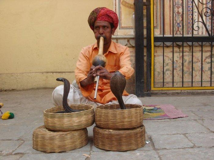 интересное о кобрах/4171694_kobri_v_indii (700x525, 74Kb)