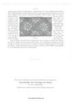 Превью DMC__Motif_de_Broderie_copte,_1890-1-005 (494x700, 100Kb)