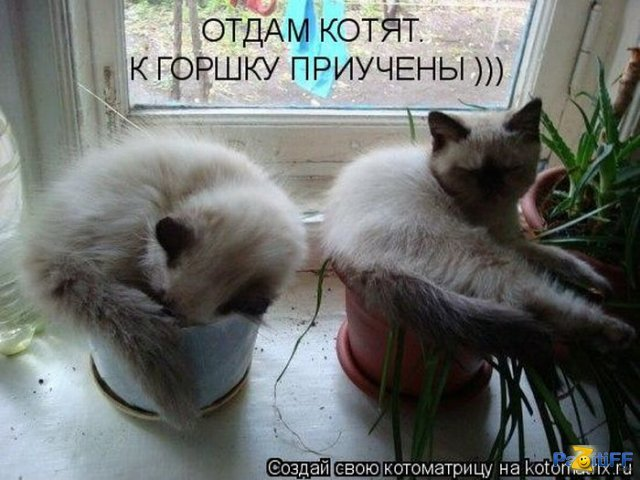 1297716856_kotomatrix_33 (640x480, 64Kb)