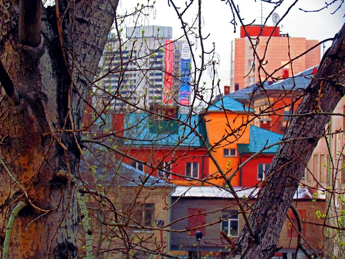 городской пейзаж, город, Новосибирск, вид из окна, фото Новосибирска, фото из окна, весна, весенняя листва, листва, зелень/4203019_IMG_0050 (700x525, 386Kb)