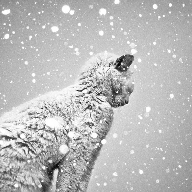 черно-белые фото Бенуа Курти 7 (670x670, 308Kb)