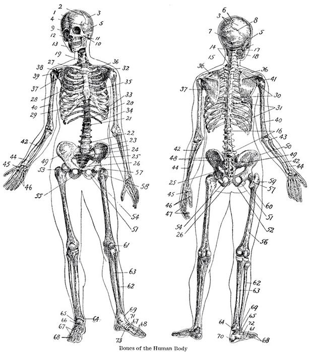 Анатомическая подушка или поделка к Хеллоуину (7) (613x700, 200Kb)