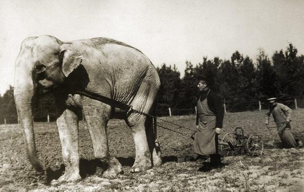 7 русских слонов