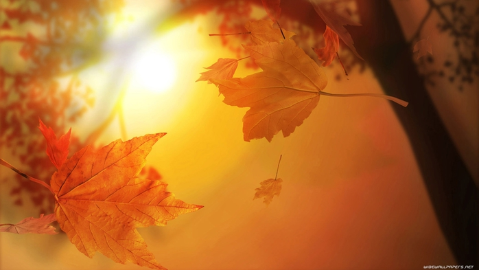 autumn-wallpaper-1600x900-004 (700x393, 140Kb)