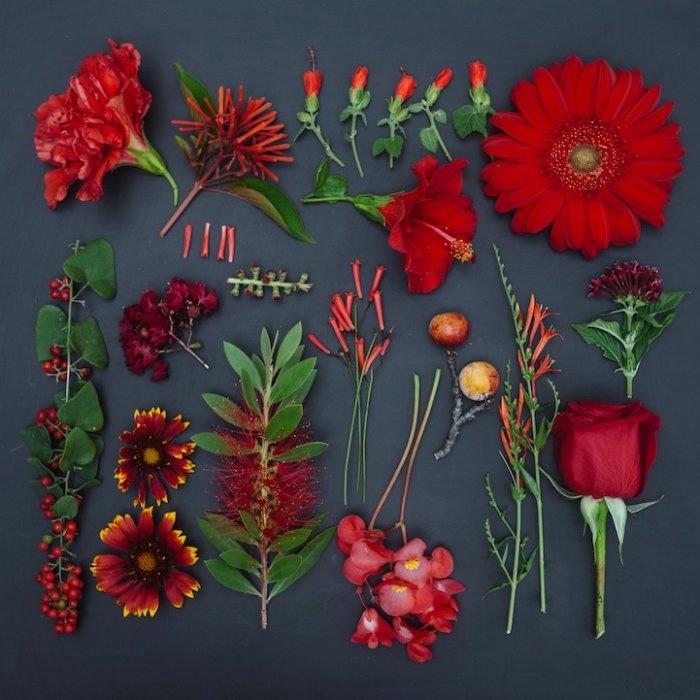 Emily Blincoe фото цветов 3 (700x700, 179Kb)