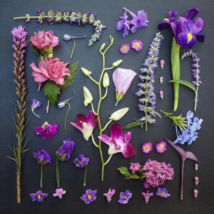 Emily Blincoe фото цветов 7 (700x700, 224Kb)