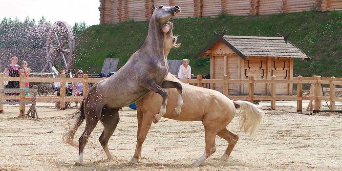 Horsepkr017 (700x350, 343Kb)