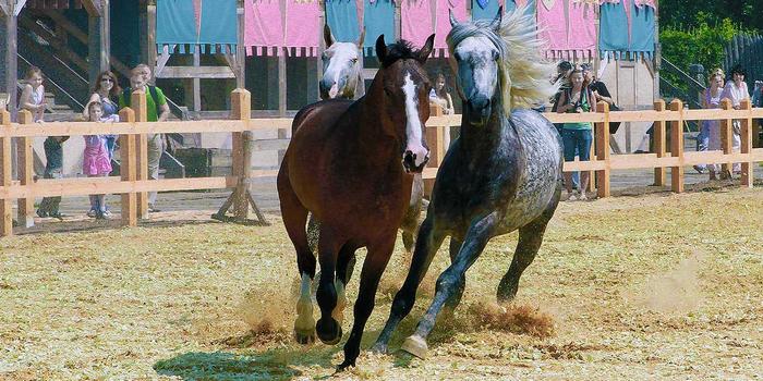 Horsepkr018 (700x350, 396Kb)