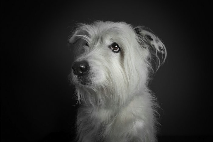 прикольные фото собак 1 (700x466, 53Kb)