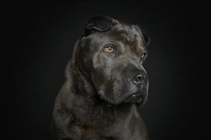 прикольные фото собак 3 (700x466, 58Kb)