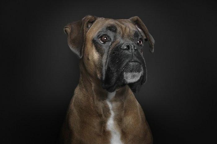 прикольные фото собак 5 (700x466, 58Kb)