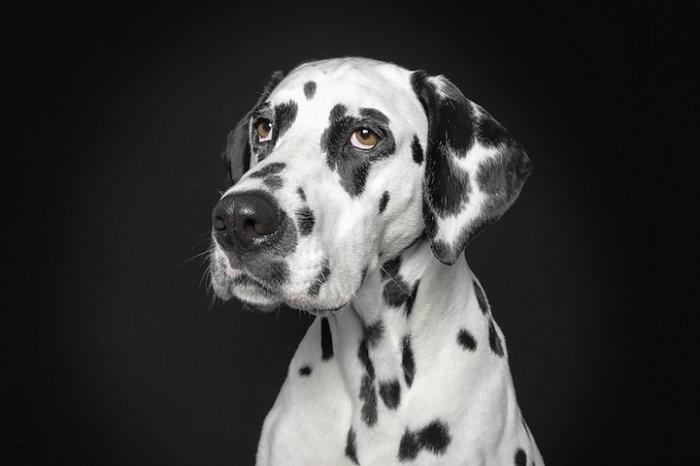 прикольные фото собак 7 (700x466, 64Kb)