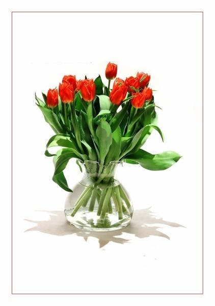 тюльпан, натюрм. 5 (422x600, 128Kb)