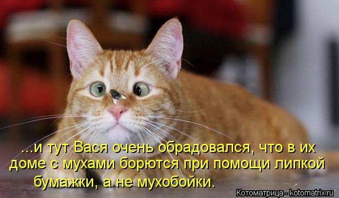 kotomatritsa_5I (695x405, 128Kb)