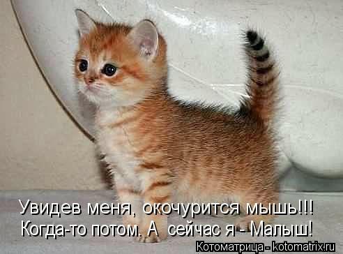 kotomatritsa_9c (492x364, 68Kb)