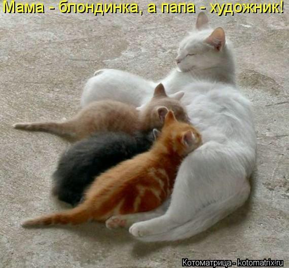 kotomatritsa_c4u (570x529, 120Kb)