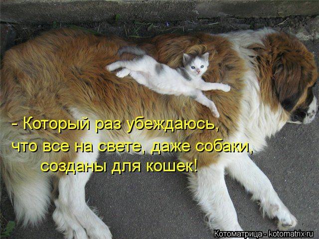 kotomatritsa_qD (640x480, 181Kb)