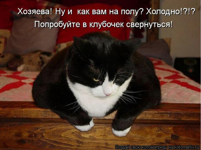 kotomatritsa_vU (700x521, 224Kb)