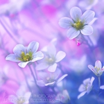 Превью have_heart_my_dear_by_lpdragonfly (500x500, 155Kb)