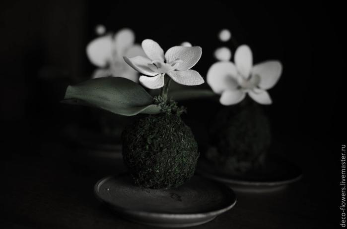 57913422427-tsvety-floristika-kokedama-falenopsis (700x463, 100Kb)