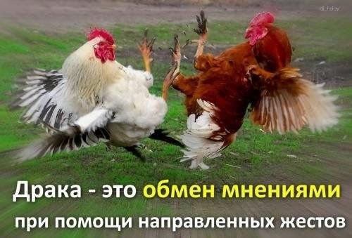 3 (500x339, 87Kb)