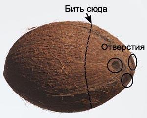 kokos (300x241, 37Kb)