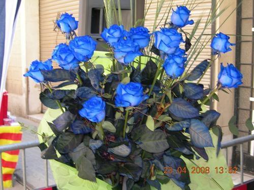 синие розы9а (500x375, 127Kb)