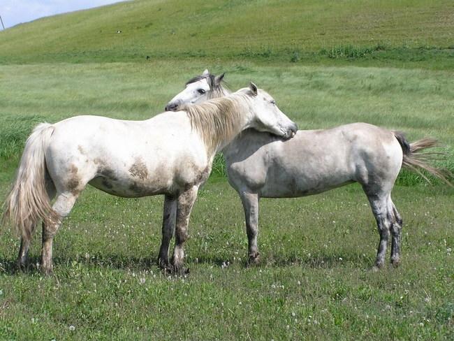Картинки по запросу лошади обнимаются