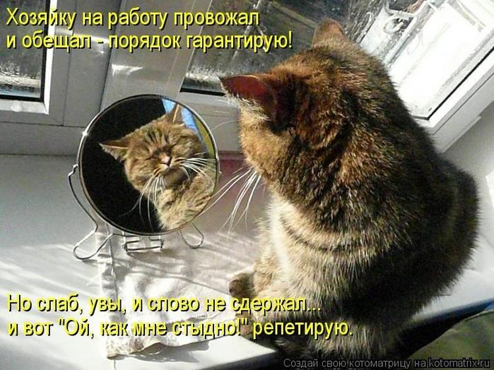 Юмор монолог кот