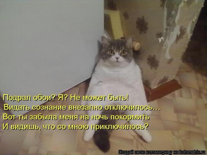 104502331_large_kotomatritsa_E8 (700x524, 189Kb)