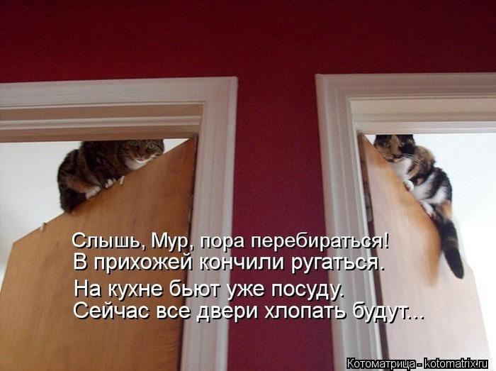 104502336_large_kotomatritsa_Jy (700x523, 187Kb)