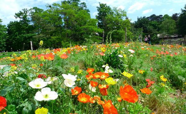 image-2013-07-11-15167260-56-parc-floral-paris (600x369, 342Kb)