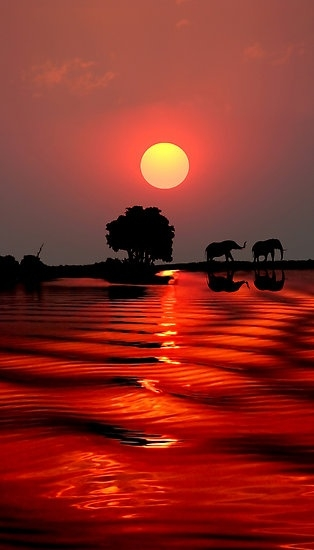 SUNSET WITH ELEPHANTS - BOTSWANA by Michael Sheridan (314x550, 79Kb)