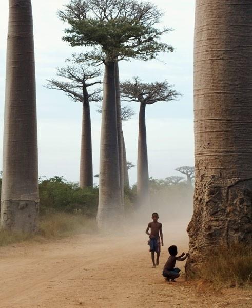 Madagascar (491x600, 165Kb)