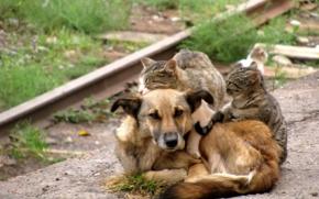 собака и котэ/4348076_497764n (290x181, 63Kb)