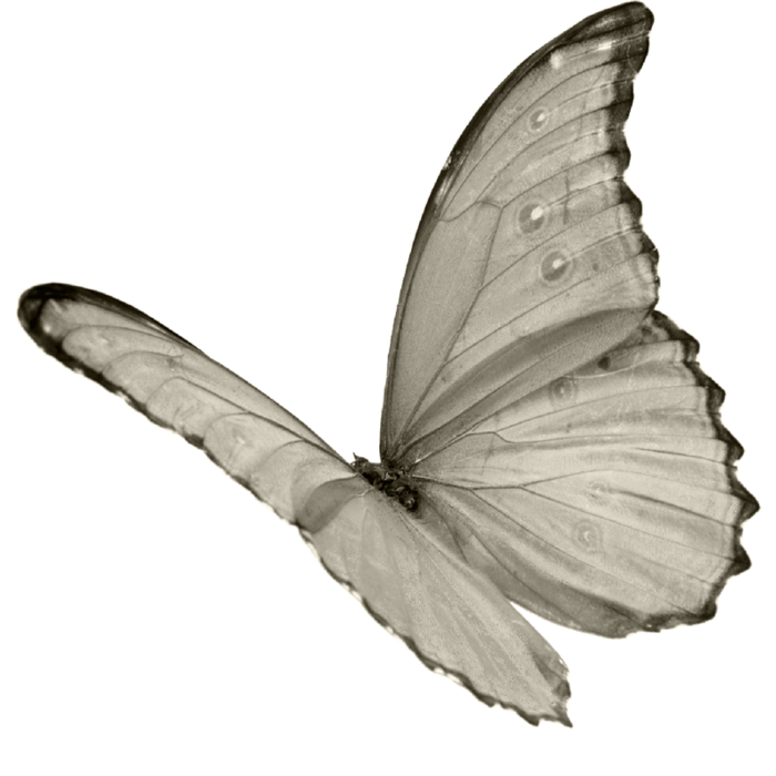 wenpttbouchon papillon 4 (700x700, 234Kb)