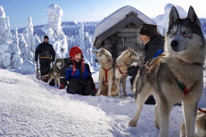 Lapland-husky--1024x682 (700x466, 91Kb)