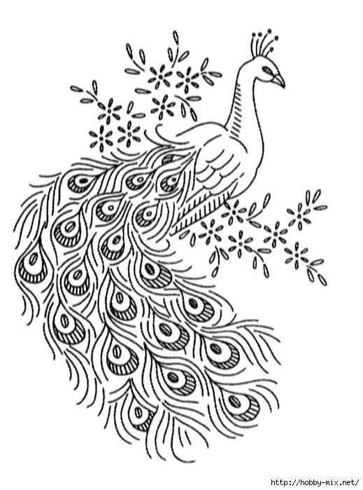 小孔雀简笔画动物 小孔雀动物简笔画步骤图片大全