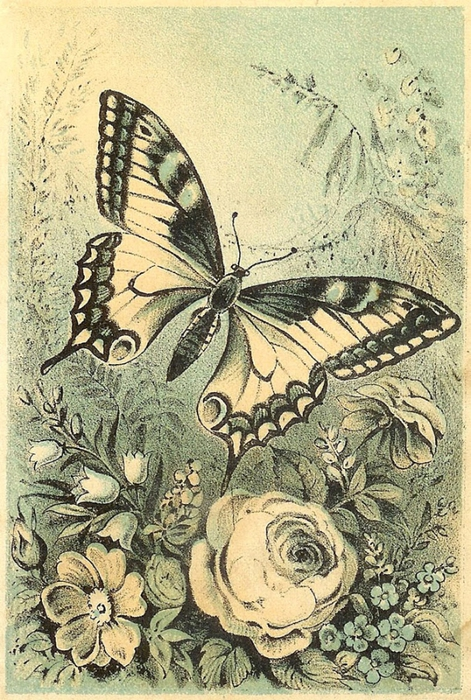 fondo-mariposa-vintage-scrapbooking (471x700, 345Kb)
