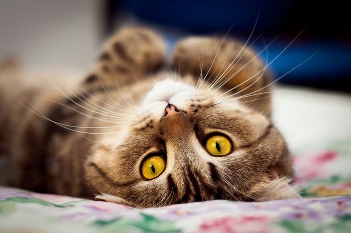 прикольные фото кошек 1 (700x464, 198Kb)