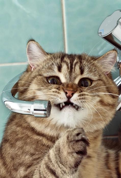 прикольные фото кошек 3 (475x700, 235Kb)