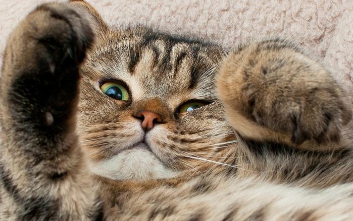 прикольные фото кошек 11 (700x439, 271Kb)