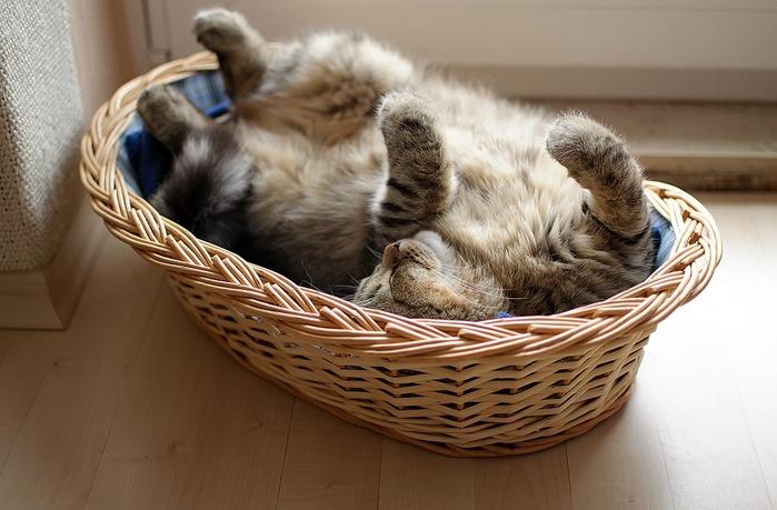 прикольные фото кошек 13 (700x459, 238Kb)