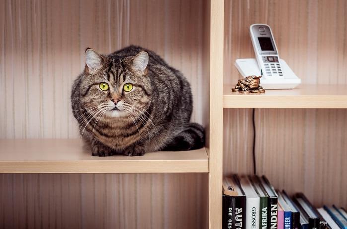 прикольные фото кошек 20 (700x461, 205Kb)