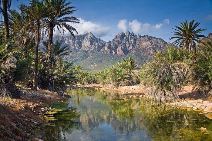 3925073_Socotra08 (700x466, 100Kb)
